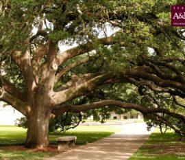 The Century Tree